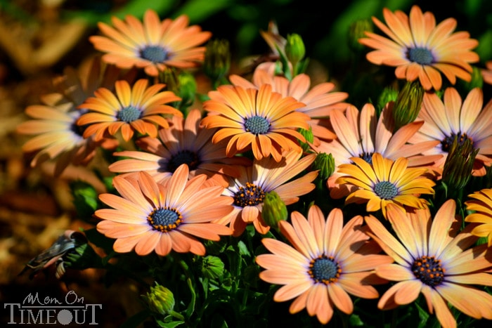 spring-2013-flower