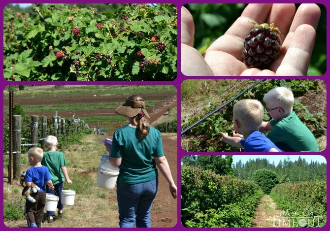berry-picking-collage
