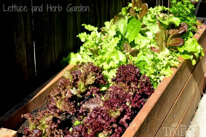 Side Yard Vegetable Garden Small Space Solutions Mom