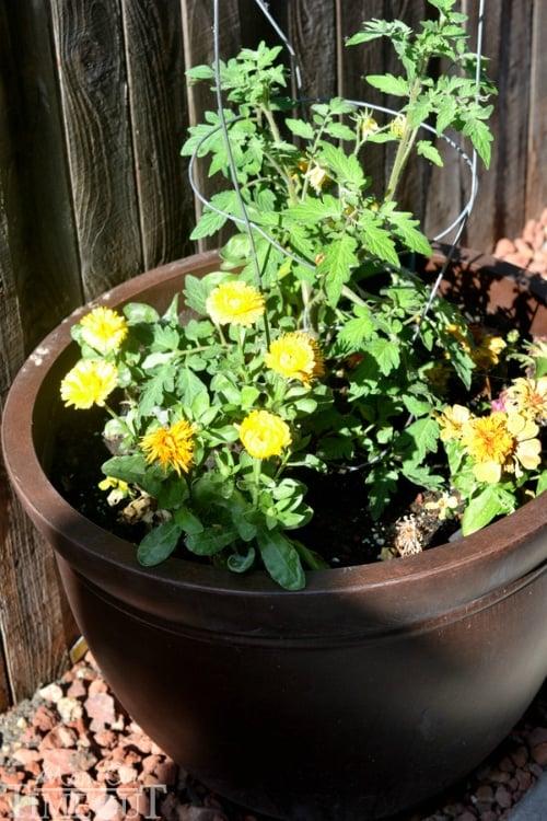pots-between-planters