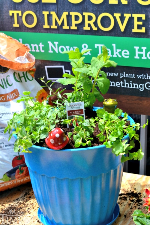 Small Space Gardening: Organic Potted Herb Garden | MomOnTimeout.com
