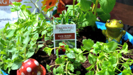 Small Space Gardening: Organic Potted Herb Garden