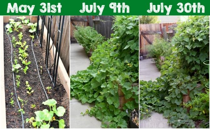 time-lapse-side-yard-planter