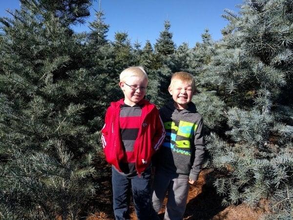 apple-hill-christmas-tree