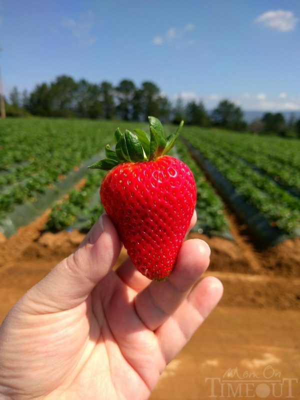 ca-strawberry-tour-1