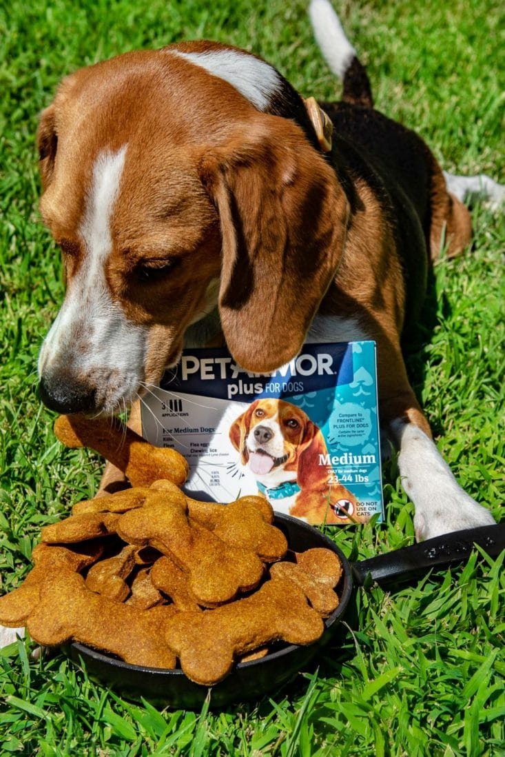 best dog treats with copper out on grass